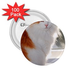 Norwegian Forest Cat Sitting 4 2.25  Buttons (100 pack)