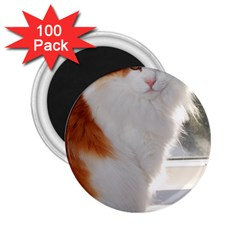 Norwegian Forest Cat Sitting 4 2.25  Magnets (100 pack)