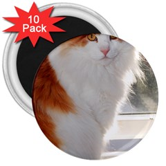 Norwegian Forest Cat Sitting 4 3  Magnets (10 pack)