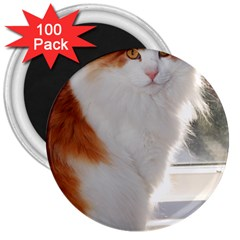 Norwegian Forest Cat Sitting 4 3  Magnets (100 pack)