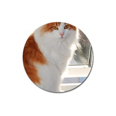 Norwegian Forest Cat Sitting 4 Magnet 3  (Round)