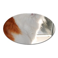 Norwegian Forest Cat Sitting 4 Oval Magnet