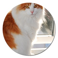 Norwegian Forest Cat Sitting 4 Magnet 5  (Round)