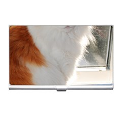 Norwegian Forest Cat Sitting 4 Business Card Holders