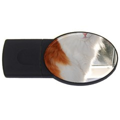 Norwegian Forest Cat Sitting 4 USB Flash Drive Oval (2 GB)
