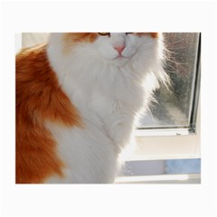 Norwegian Forest Cat Sitting 4 Small Glasses Cloth