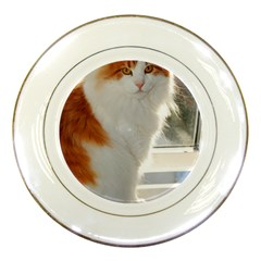 Norwegian Forest Cat Sitting 4 Porcelain Plates
