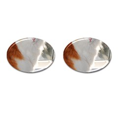 Norwegian Forest Cat Sitting 4 Cufflinks (Oval)