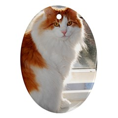 Norwegian Forest Cat Sitting 4 Oval Ornament (Two Sides)