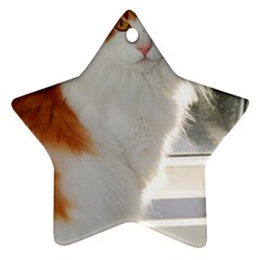 Norwegian Forest Cat Sitting 4 Star Ornament (Two Sides)