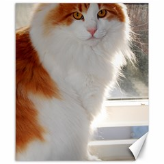 Norwegian Forest Cat Sitting 4 Canvas 8  x 10