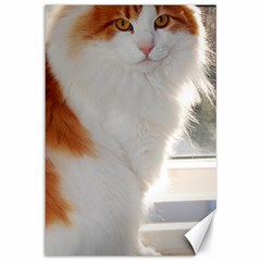 Norwegian Forest Cat Sitting 4 Canvas 12  x 18