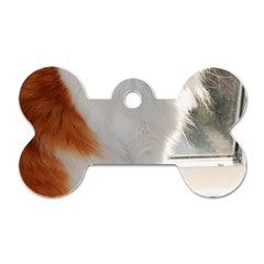 Norwegian Forest Cat Sitting 4 Dog Tag Bone (Two Sides)