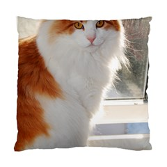 Norwegian Forest Cat Sitting 4 Standard Cushion Case (One Side)