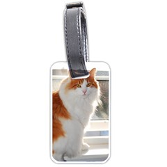 Norwegian Forest Cat Sitting 4 Luggage Tags (One Side)