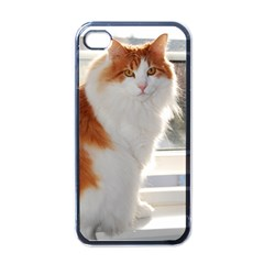 Norwegian Forest Cat Sitting 4 Apple iPhone 4 Case (Black)