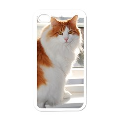 Norwegian Forest Cat Sitting 4 Apple iPhone 4 Case (White)
