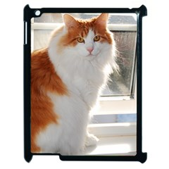 Norwegian Forest Cat Sitting 4 Apple iPad 2 Case (Black)