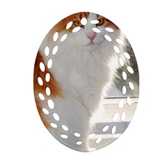 Norwegian Forest Cat Sitting 4 Ornament (Oval Filigree)