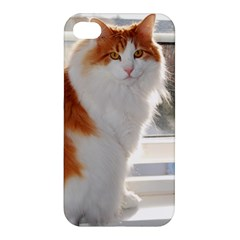 Norwegian Forest Cat Sitting 4 Apple iPhone 4/4S Hardshell Case