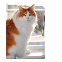 Norwegian Forest Cat Sitting 4 Small Garden Flag (Two Sides)
