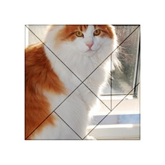 Norwegian Forest Cat Sitting 4 Acrylic Tangram Puzzle (4  x 4 )