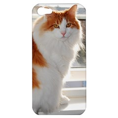 Norwegian Forest Cat Sitting 4 Apple iPhone 5 Hardshell Case