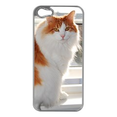 Norwegian Forest Cat Sitting 4 Apple iPhone 5 Case (Silver)