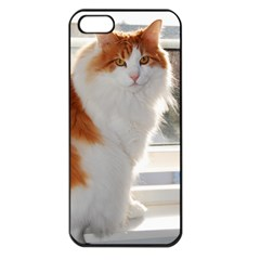 Norwegian Forest Cat Sitting 4 Apple iPhone 5 Seamless Case (Black)
