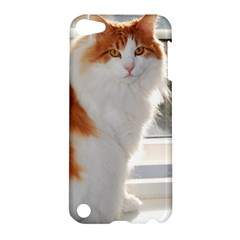 Norwegian Forest Cat Sitting 4 Apple iPod Touch 5 Hardshell Case