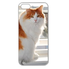 Norwegian Forest Cat Sitting 4 Apple Seamless iPhone 5 Case (Clear)