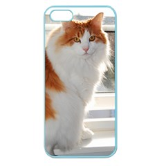 Norwegian Forest Cat Sitting 4 Apple Seamless iPhone 5 Case (Color)