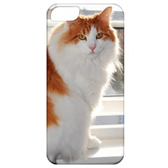 Norwegian Forest Cat Sitting 4 Apple iPhone 5 Classic Hardshell Case