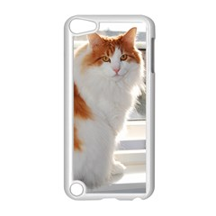 Norwegian Forest Cat Sitting 4 Apple iPod Touch 5 Case (White)