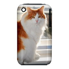 Norwegian Forest Cat Sitting 4 iPhone 3S/3GS