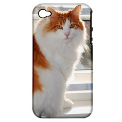 Norwegian Forest Cat Sitting 4 Apple iPhone 4/4S Hardshell Case (PC+Silicone)