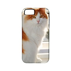 Norwegian Forest Cat Sitting 4 Apple iPhone 5 Classic Hardshell Case (PC+Silicone)
