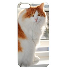 Norwegian Forest Cat Sitting 4 Apple iPhone 5 Hardshell Case with Stand