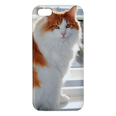 Norwegian Forest Cat Sitting 4 Apple iPhone 5 Premium Hardshell Case