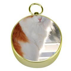 Norwegian Forest Cat Sitting 4 Gold Compasses