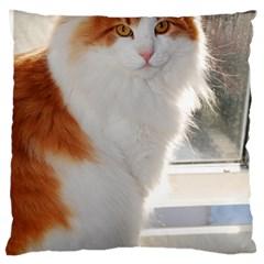 Norwegian Forest Cat Sitting 4 Large Flano Cushion Case (One Side)