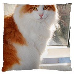 Norwegian Forest Cat Sitting 4 Large Flano Cushion Case (Two Sides)