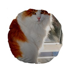 Norwegian Forest Cat Sitting 4 Standard 15  Premium Flano Round Cushions