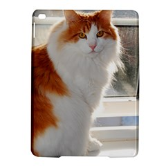 Norwegian Forest Cat Sitting 4 iPad Air 2 Hardshell Cases