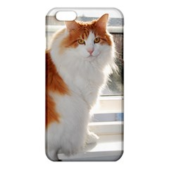 Norwegian Forest Cat Sitting 4 iPhone 6 Plus/6S Plus TPU Case