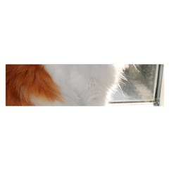 Norwegian Forest Cat Sitting 4 Satin Scarf (Oblong)