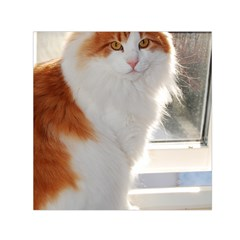 Norwegian Forest Cat Sitting 4 Small Satin Scarf (Square)