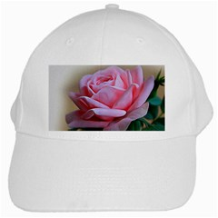 Rose Pink Flowers Pink Saturday White Cap