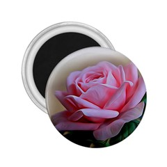 Rose Pink Flowers Pink Saturday 2 25  Magnets