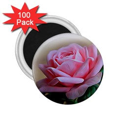 Rose Pink Flowers Pink Saturday 2 25  Magnets (100 Pack)